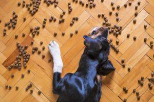 Misky pre psov podľa veľkosti